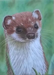 15009 hermelijn