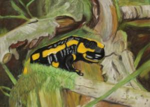 Vuursallamander (Salamandra salamandra) suède-karton 20 x 29 cm. 16017ef
