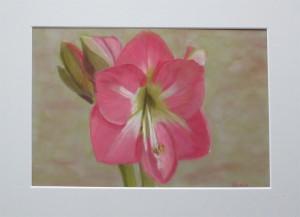 Amaryllis suède-karton 20 x 29 cm. verkocht